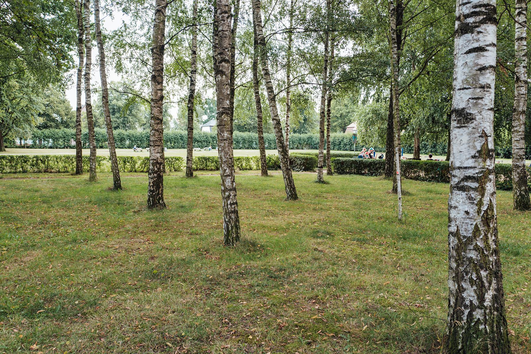 Proudly present: der Birkenwald!
