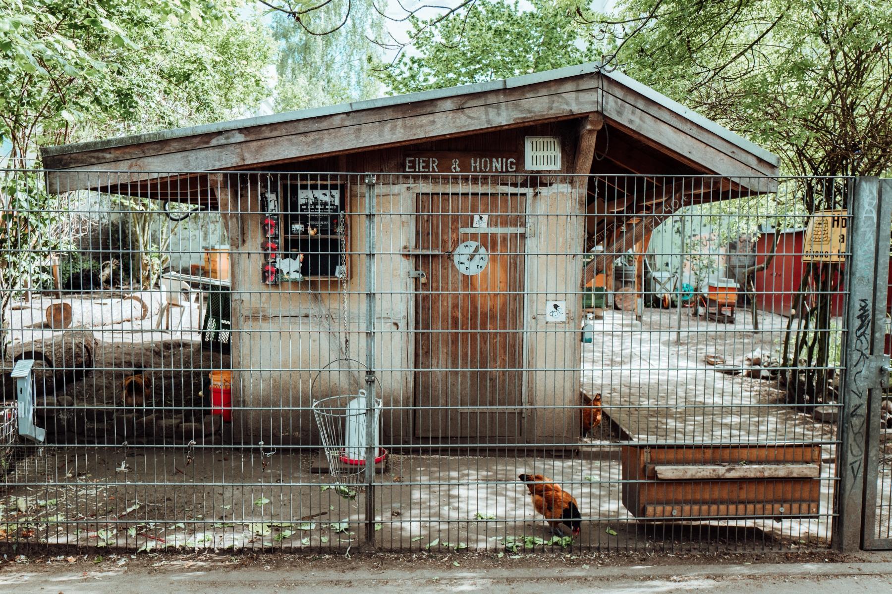 Das Zuhause der MOTTE Hühner. – ©Lisa Knauer