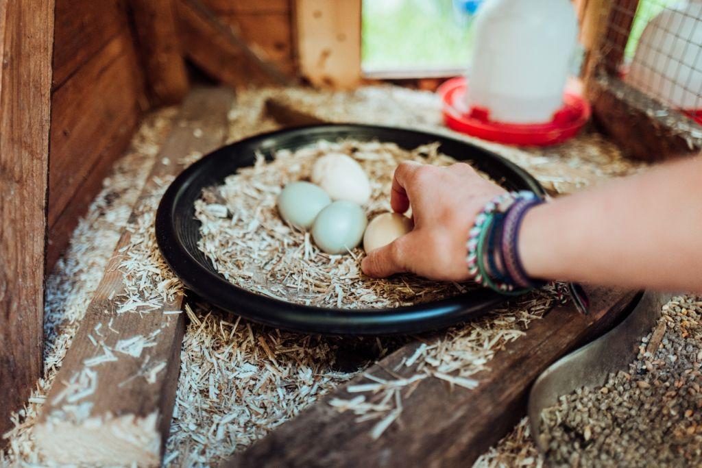 Hier gibt es täglich frische Eier.