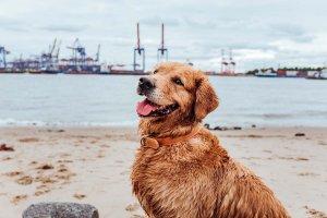 DogRocket hunde geheimtipp hamburg elbe gassistrecke