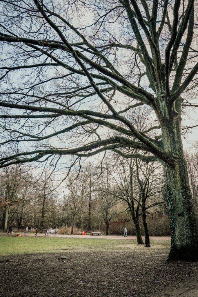 geheimtipp hamburg Eichtalpark Wandsbek wald natur linus kross14 (1)