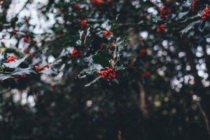Green Christmas Winterliche Pflanzen – ©Unsplash