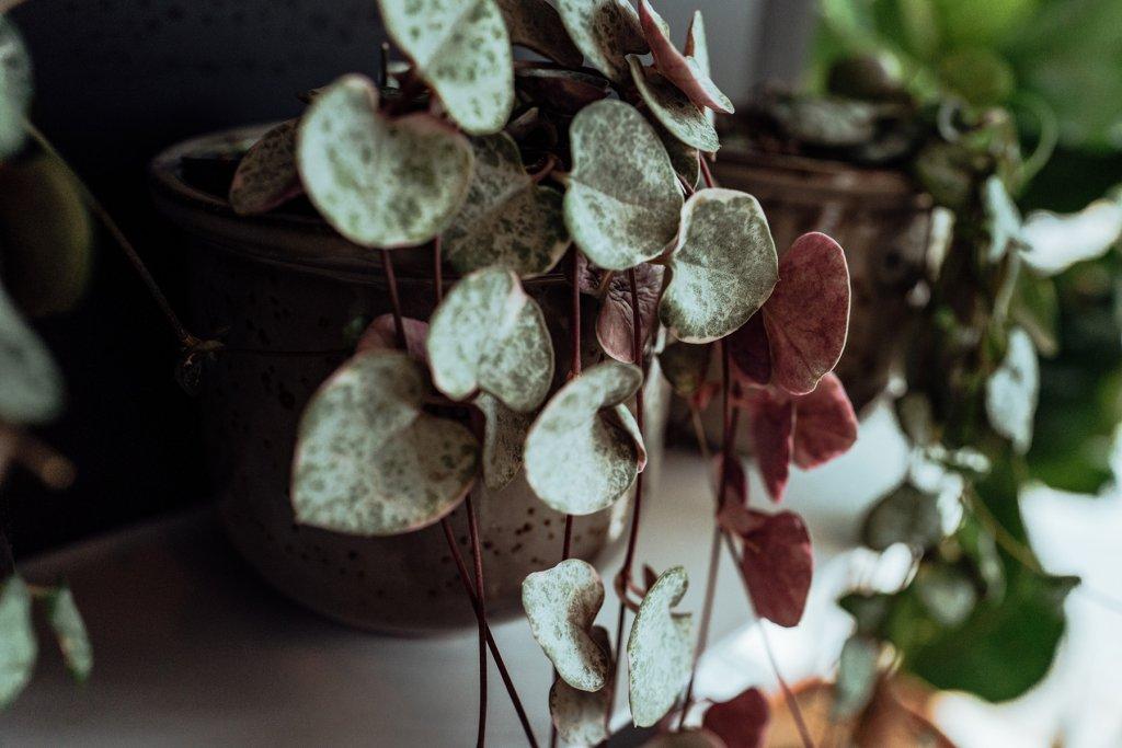 Eine Hängepflanze auf dem Regal ist Dschungel Feeling pur! – ©Geheimtipp Hamburg