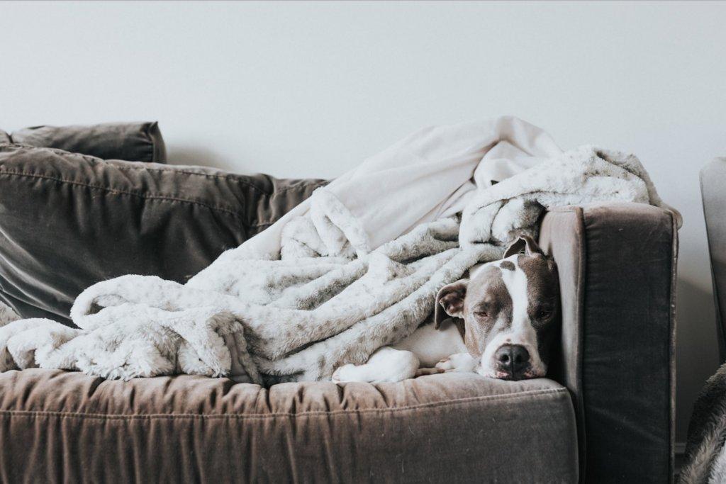 Ein gemütliches Sofa auf dem eine Decke und ein Hund liegt.