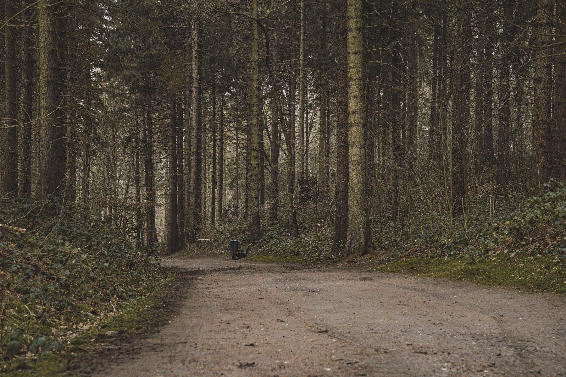 geheimtipp hamburg volkspark wald natur linus kross 14