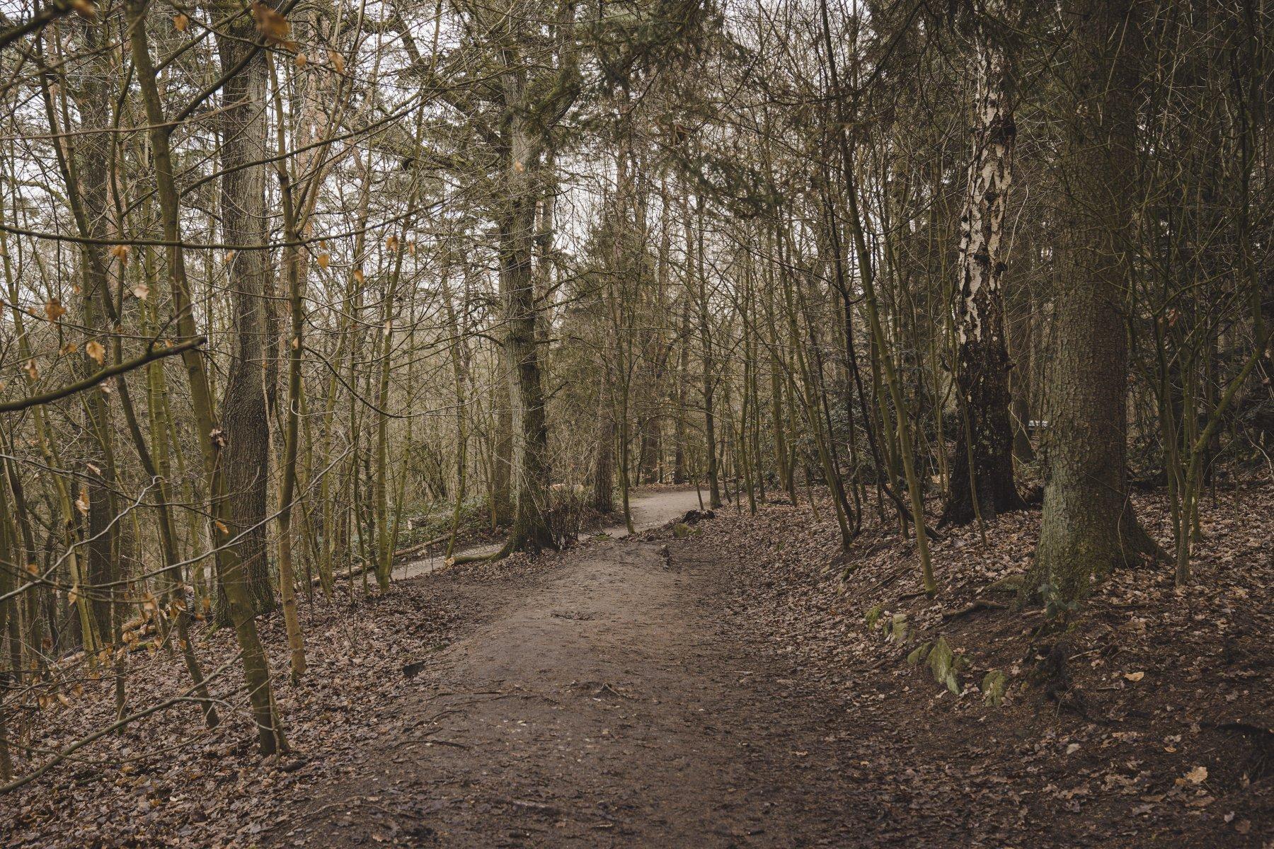 geheimtipp hamburg volkspark wald natur linus kross 22