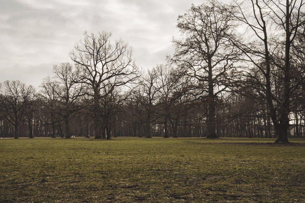 geheimtipp hamburg volkspark wald natur linus kross 9