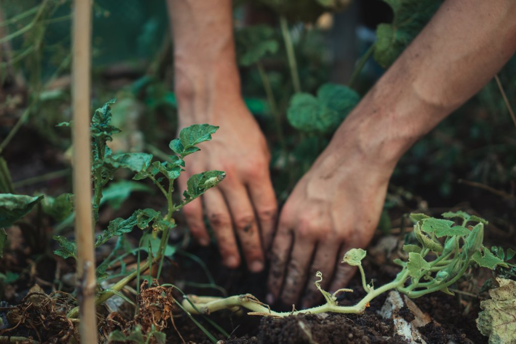 Hände in Erde