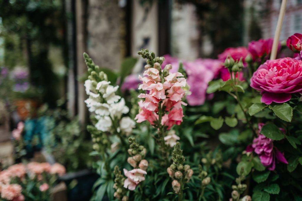 Geheimtipp Hamburg Bluetenrausch Blumenladen Dahlina Sophie Kock und Unsplash 10