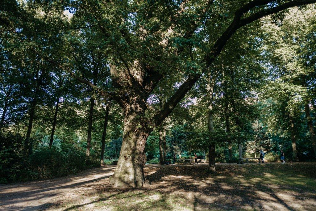 Alte Bäume, die erahnen lassen, wie alt die Geschichte des Parks bereits ist.