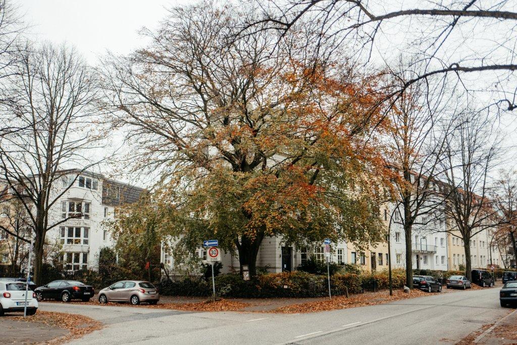 Geheimtipp Hamburg Hohenfelde Liebesbuche Linus Kross 001