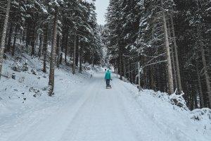 Mit dem Schlitten durch den Wald. – ©Unsplash