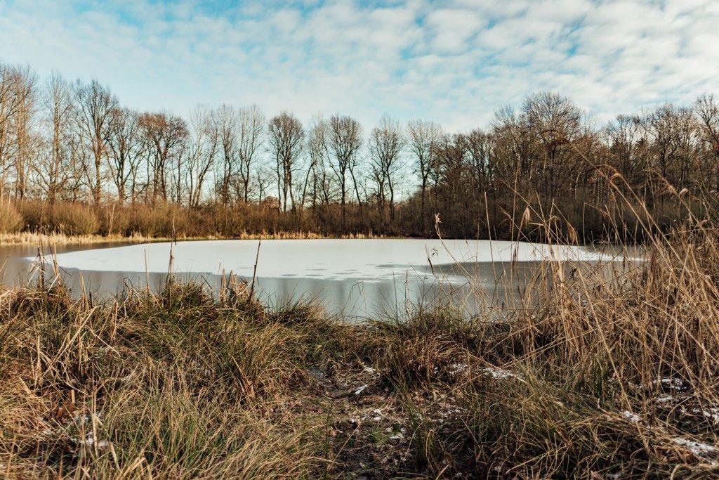 Volksdorfer Teichwiesen