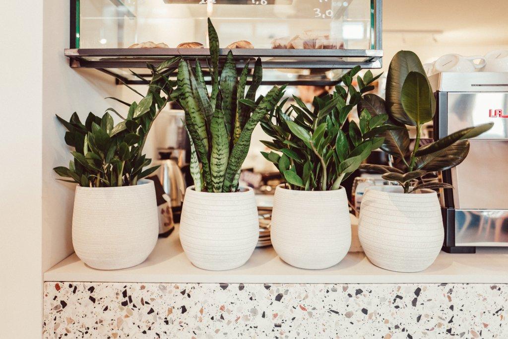 Marshall Street Coffee Inneneinrichtung Pflanzen