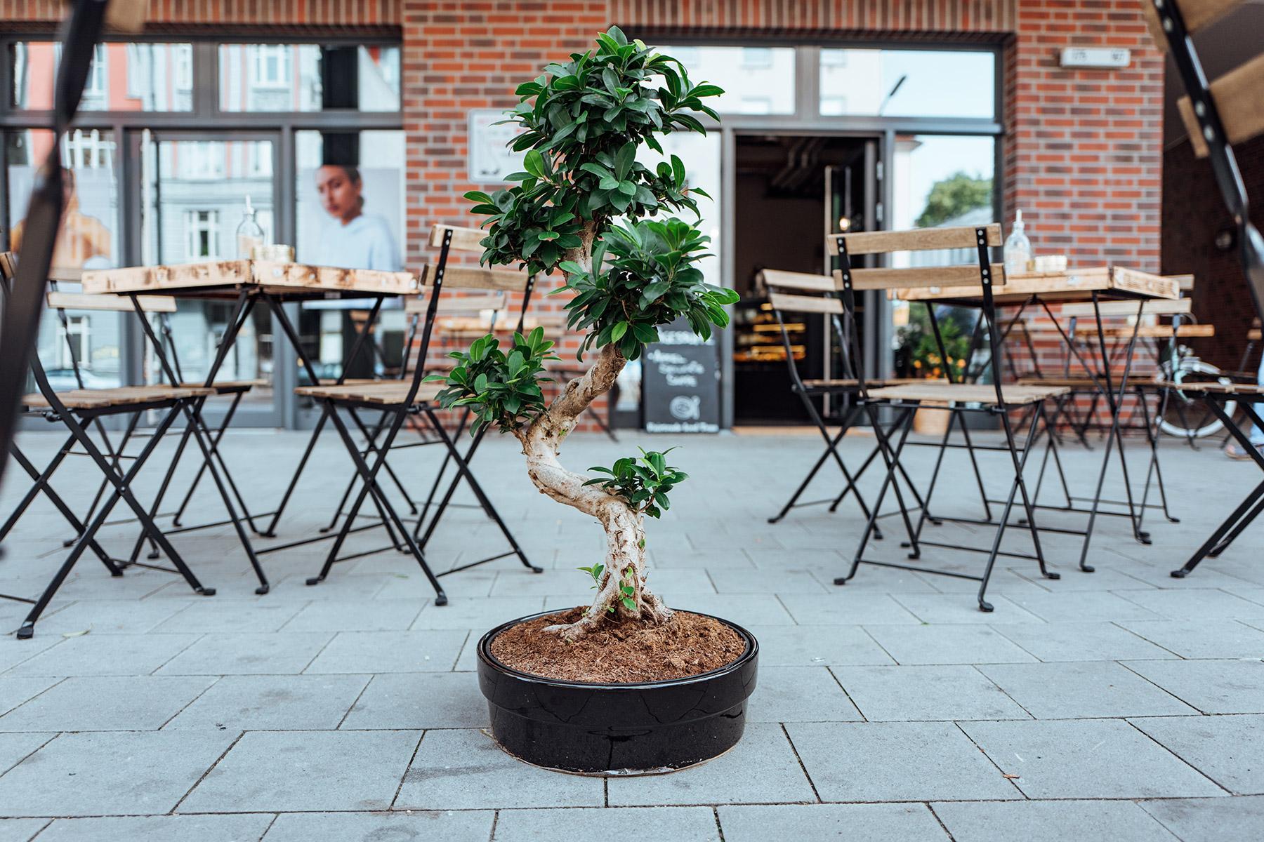 Geheimtipp Hamburg Altona Café NOLOSO Lisa Knauer 3
