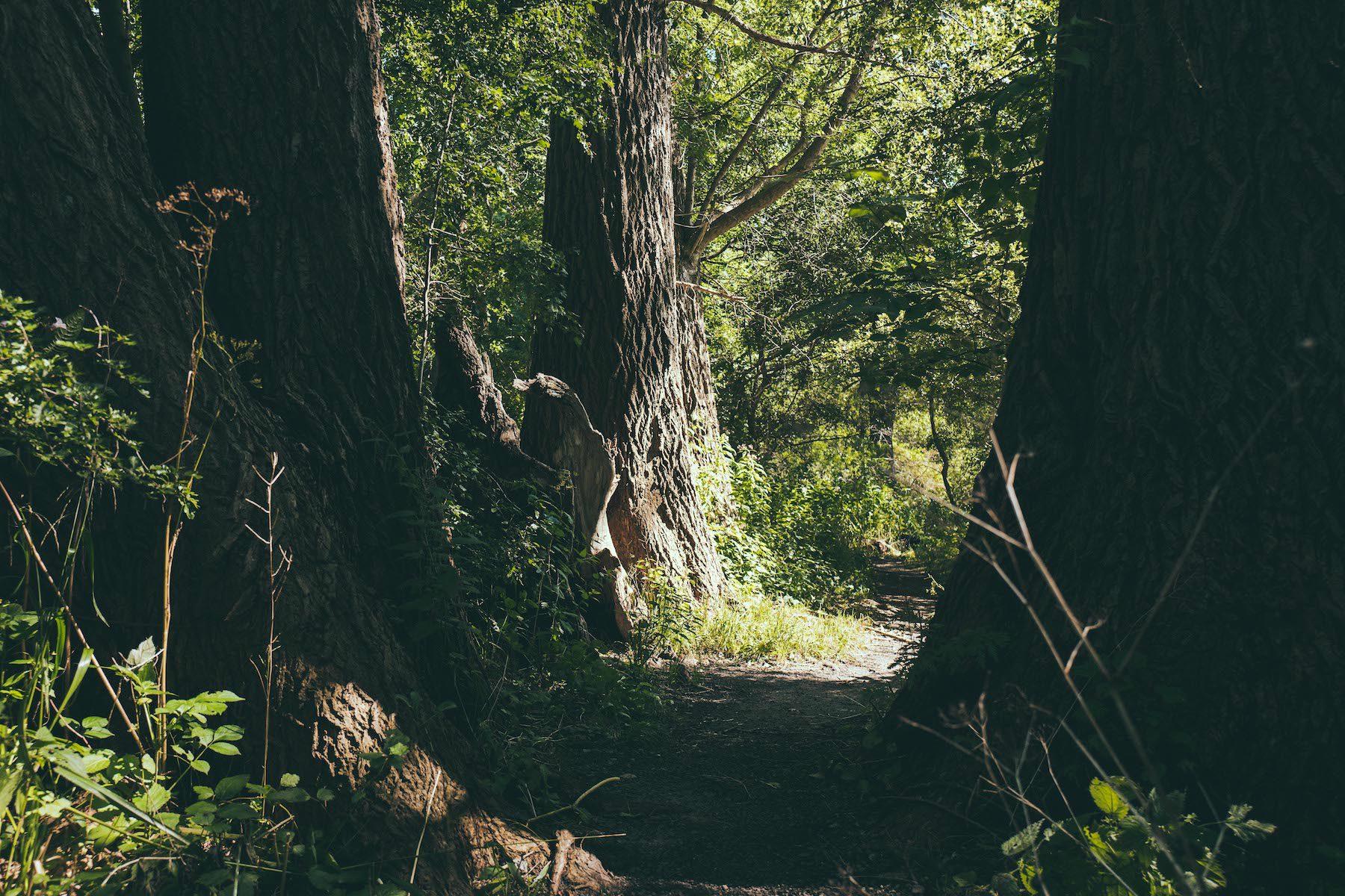 Geheimtipp Hamburg Natur & Ausflüge Wilhemsburg Naturschutzgebiet Heuckenlock Cristina Lopez 1