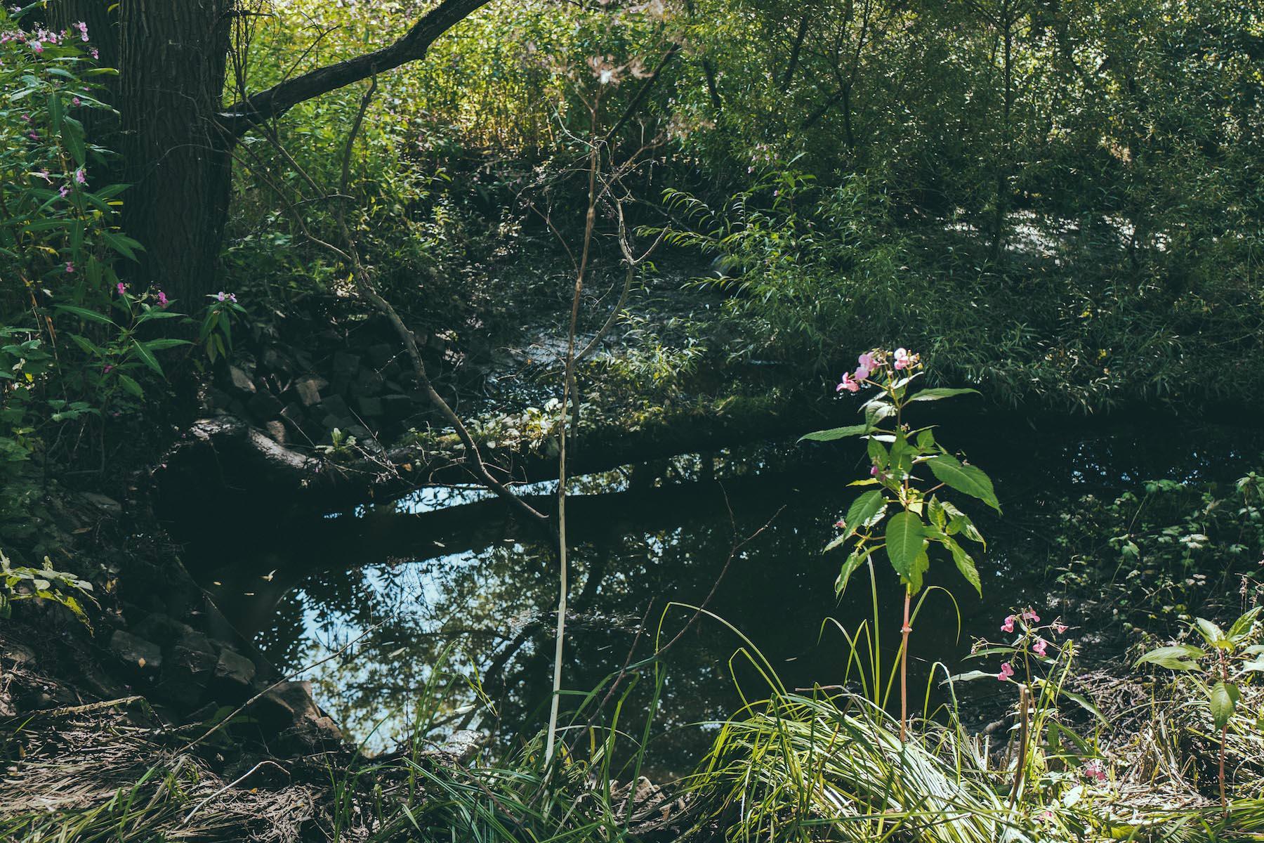 Überall kleine Seen und blühende Pflanzen.
