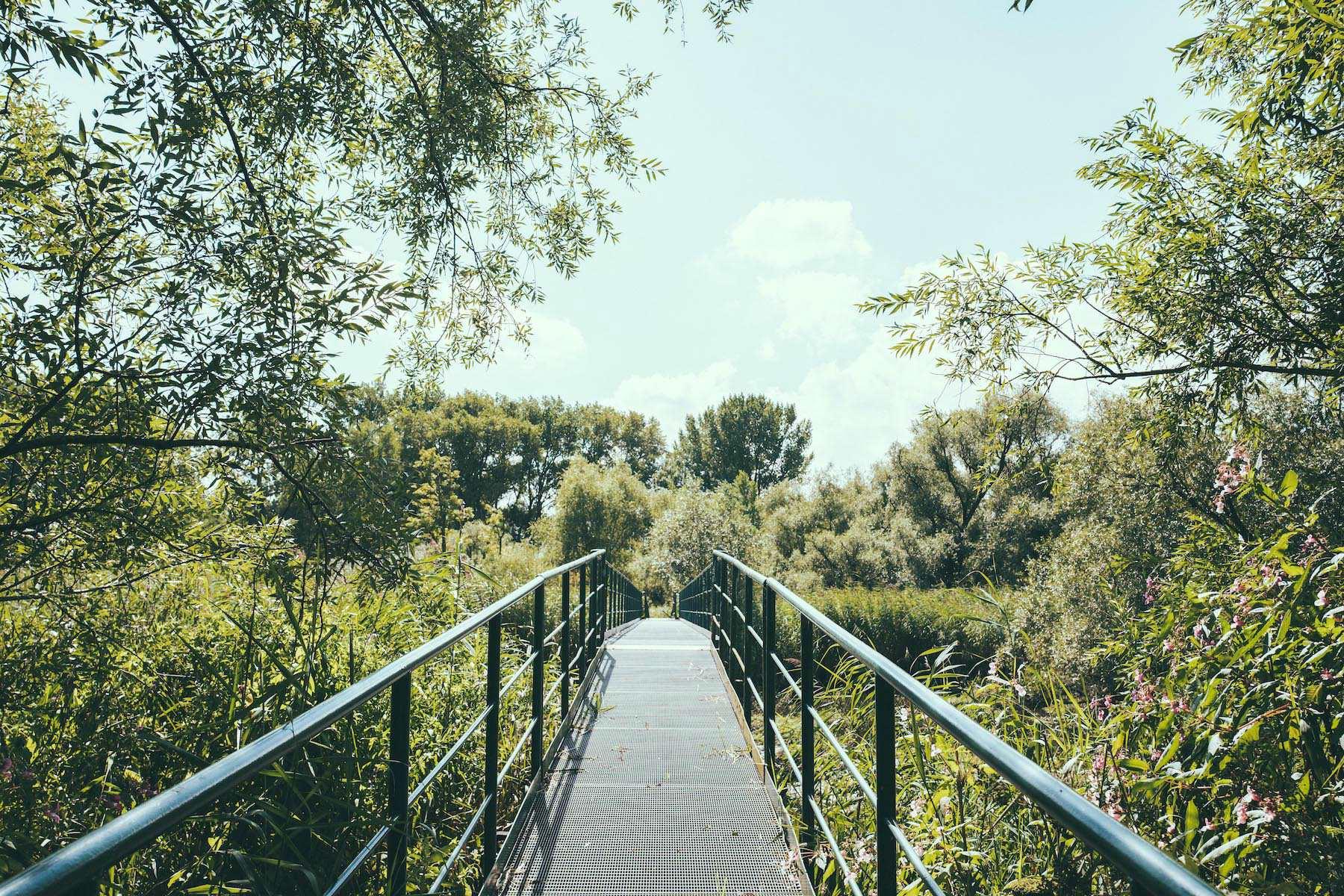Die Brücke bietet einen mega Ausblick auf die Gewässer und Natur.