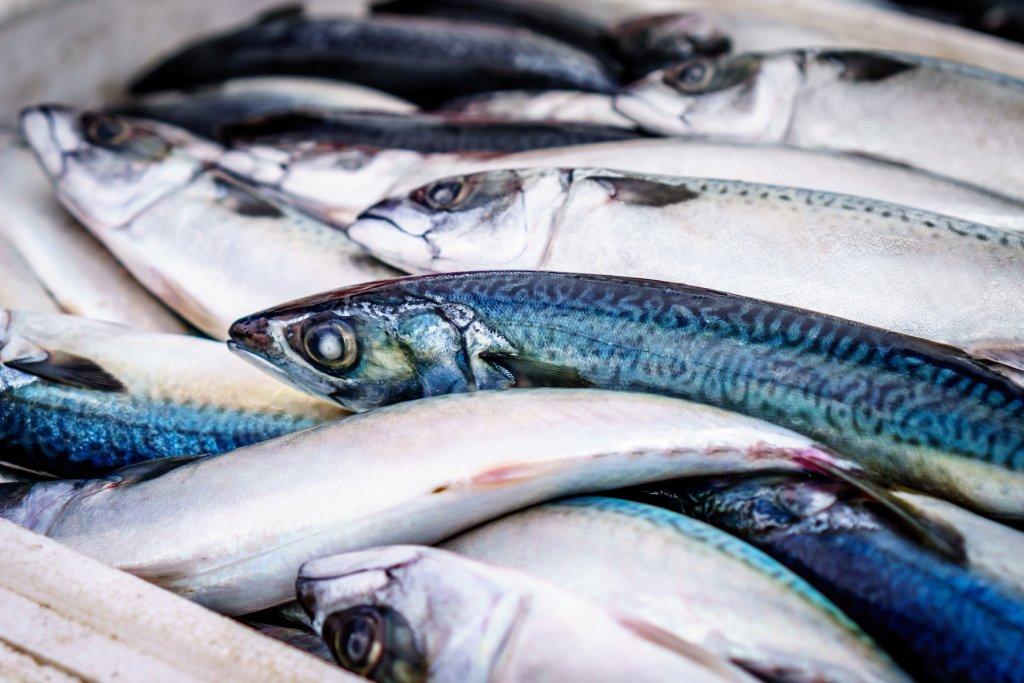 Geheimtipp Hamburg Fischladen