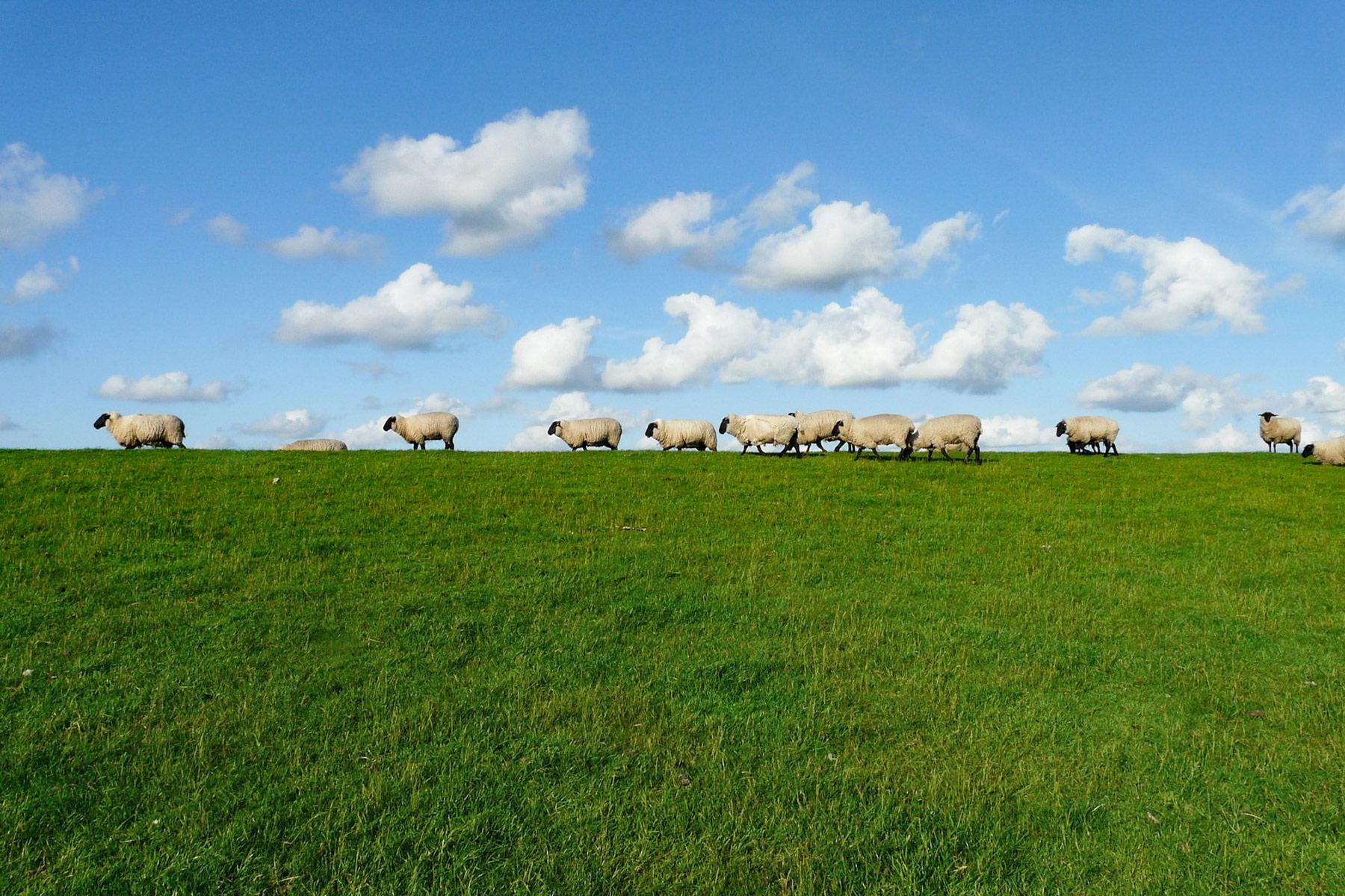 Huhu ihr Schafe!